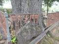 Image for Oakwood Cemetery Tree - Montgomery, AL