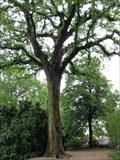 Image for George Washington Tree - Mount Vernon, VA