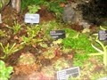 Image for Carnivorous Plant Display - Montréal, QC