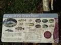 Image for Fishes of the Orara River - Coramba, NSW, Australia