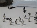 Image for Boulders Penguin Colony  -  Simon's Town, South Africa