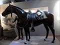 Image for Presidio Horse  -  Monterey, CA