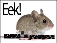 mouseeeeee