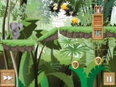 Koala Jungle