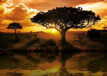 Africa Blogs