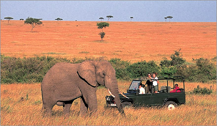 Meet Africa's wildlife on a Safari in Kenya