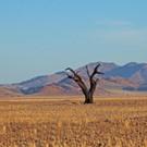 22 DAY PRIVATE GUIDED NAMIBIA & BOTSWANA SAFARI