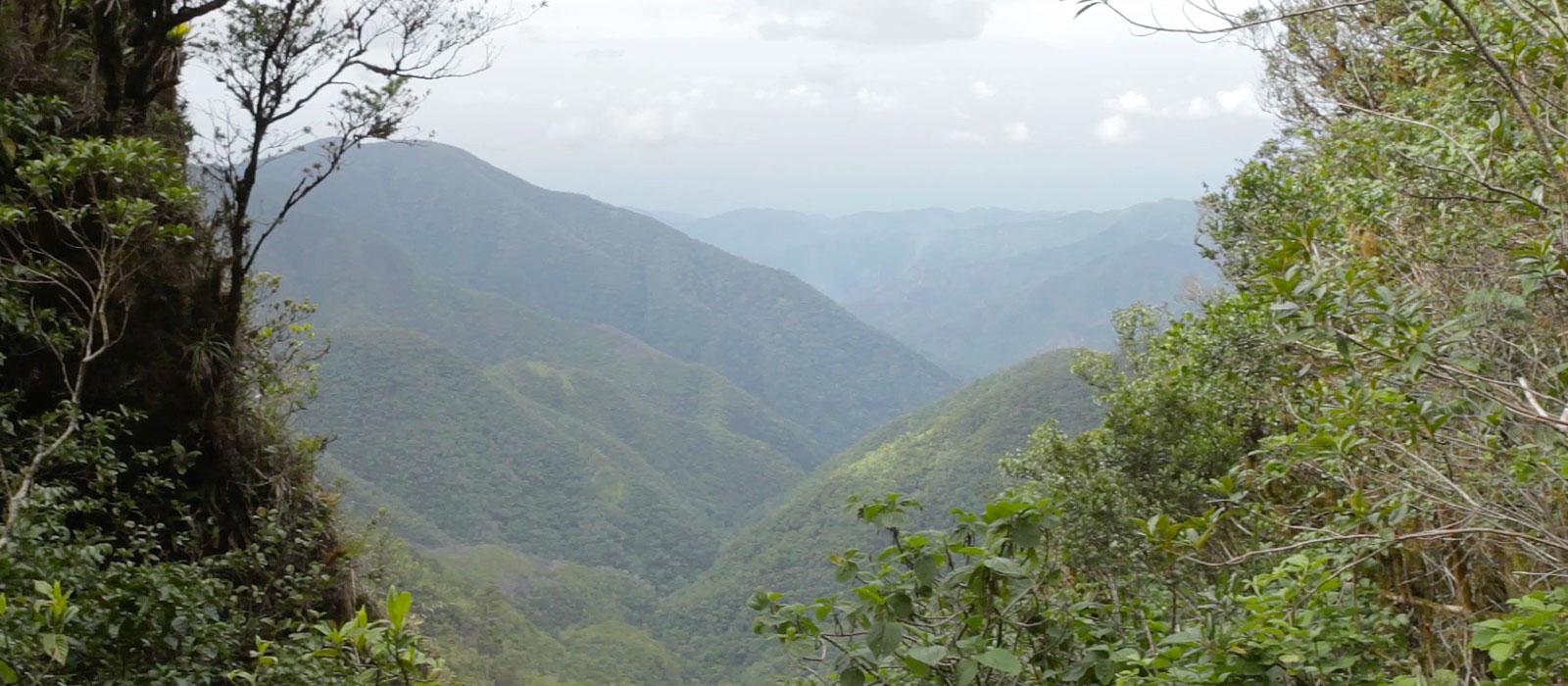 Explore the John Crow Blue Mountains