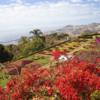 City Tour & Botanical Gardens