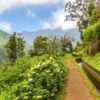 Paradise Valley - Levada Valley