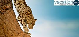Safaris At Unbeatable Value!