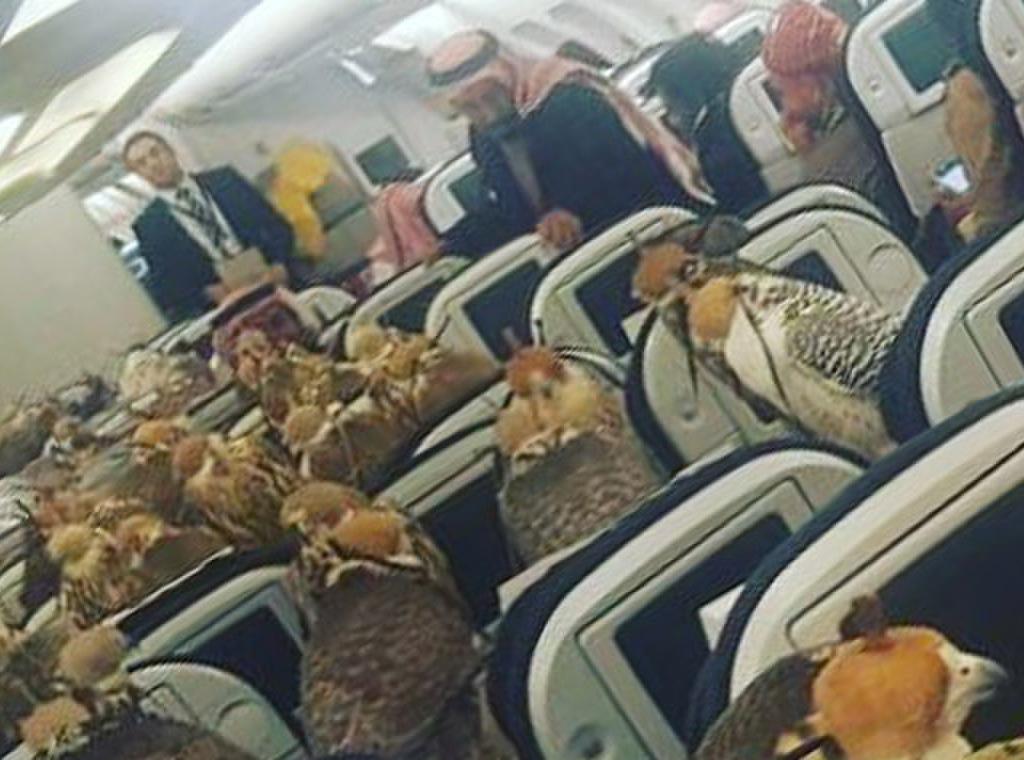 Arab my friend saudi arabia - 2 8