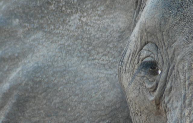 safari-africa.jpg