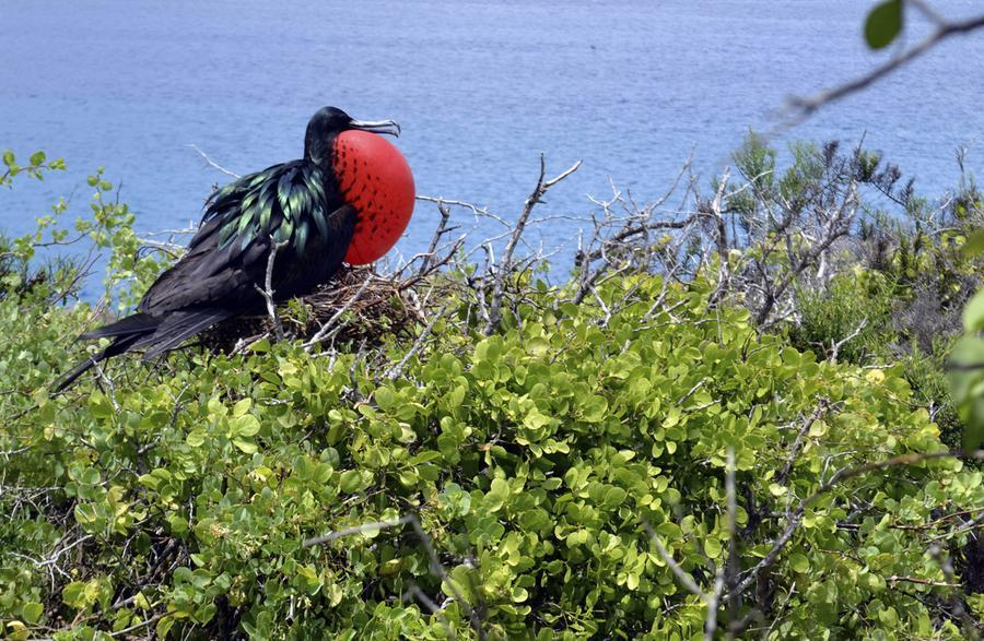 Galapagos Cruises - Aboard the catamaran 'OCEAN SPRAY'