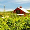 California Wine Country Active Culinary Walking Tour - 5 Days