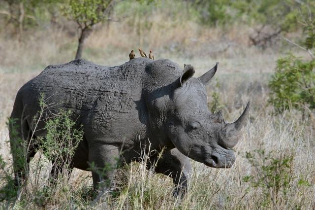 African Safari: Kenya  16 & 21 Days 2019