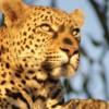 Cape Town, Kruger & Zimbabwe - 13 Days