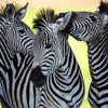 Spectacular South Africa Culture & Nature in Harmony - 13 to 15 Days