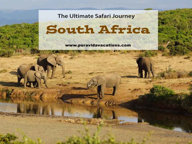 The Ultimate Safari Journey:  Spotlight on South Africa