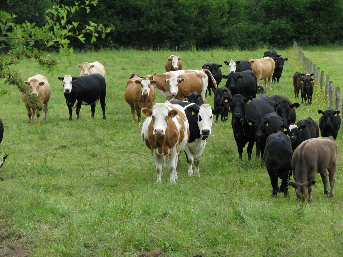 Agricultural Farm Tours