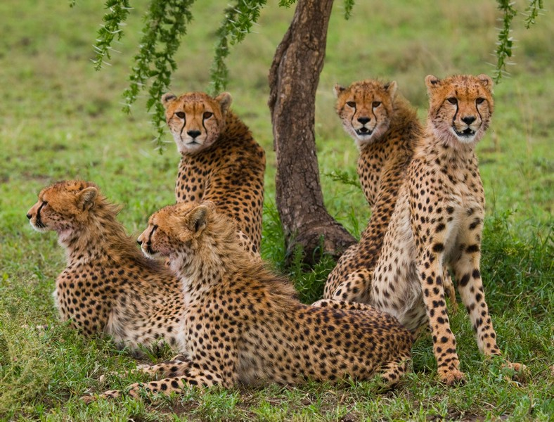 Tanzania 2 FREE NIGHTS ON US : Ngorongoro Crater and Serengeti: (9 Day / 8 Night)