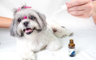 Florais e medicamentos fitoterápicos podem ajudar na saúde dos pets