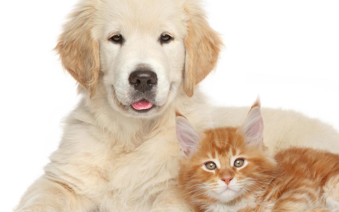 Marketing Comercial para Pet Shops – 10 Estratégias Criativas de Sucesso