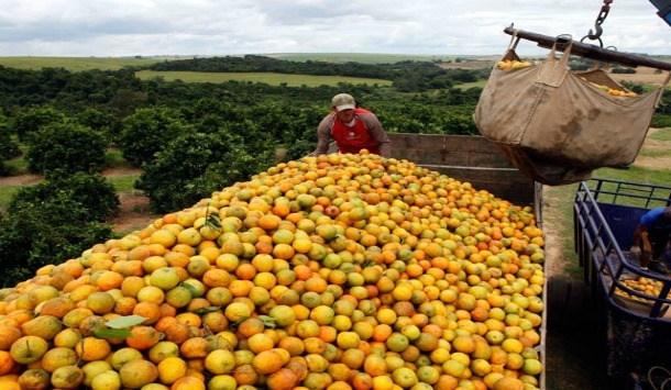 Com forte alta nas vendas para os EUA, exportação de suco de laranja cresceu 36% até maio