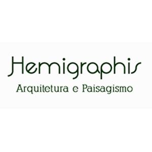 hemigraphis-arquitetura-paisagismo