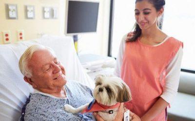 Visita de pets em hospitais é aprovada!
