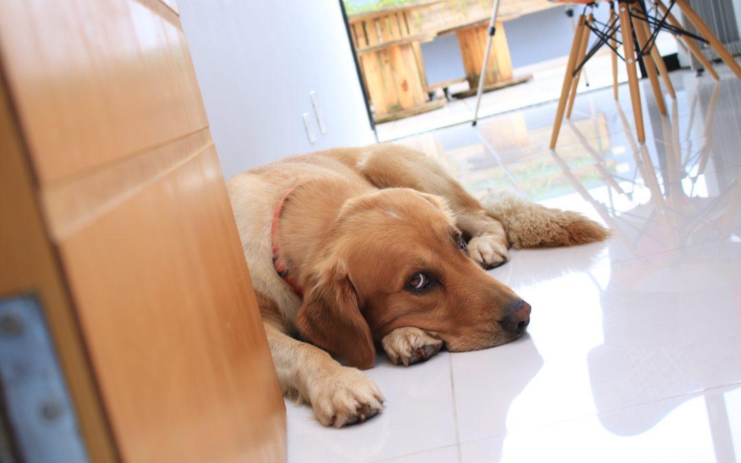 Escritório pet friendly aposta nos bichos para relaxar clientes