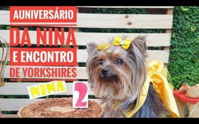 AUniversário da Nina e Encontro de Yorkshires