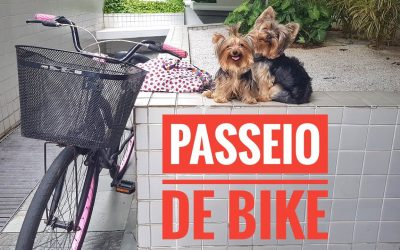 Passeio de Bike com Cachorro