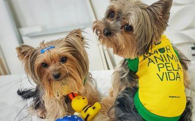 5 dicas para proteger seu pet durante a Copa