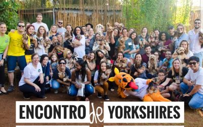 2° Encontro de Yorkshires