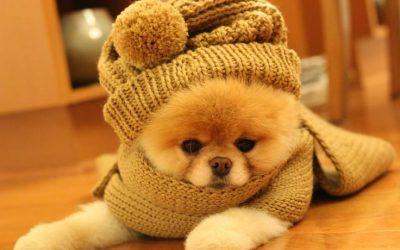 15 dias pra cuidar do seu Pet no Inverno