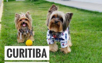 Eu, Você e os Pets em Curitiba