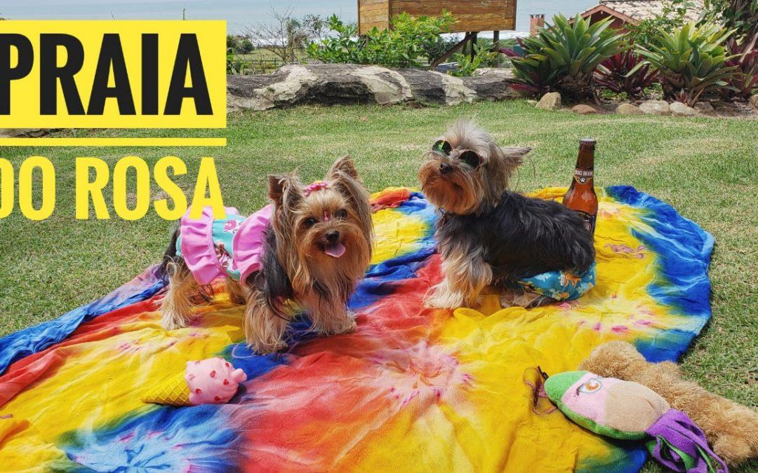 Eu, Você e os Pets em Praia do Rosa
