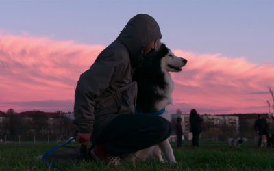 """""""Dogs"""": nova série documental do Netflix"""