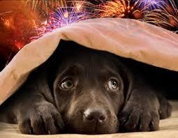 Pets X fogos de artifício