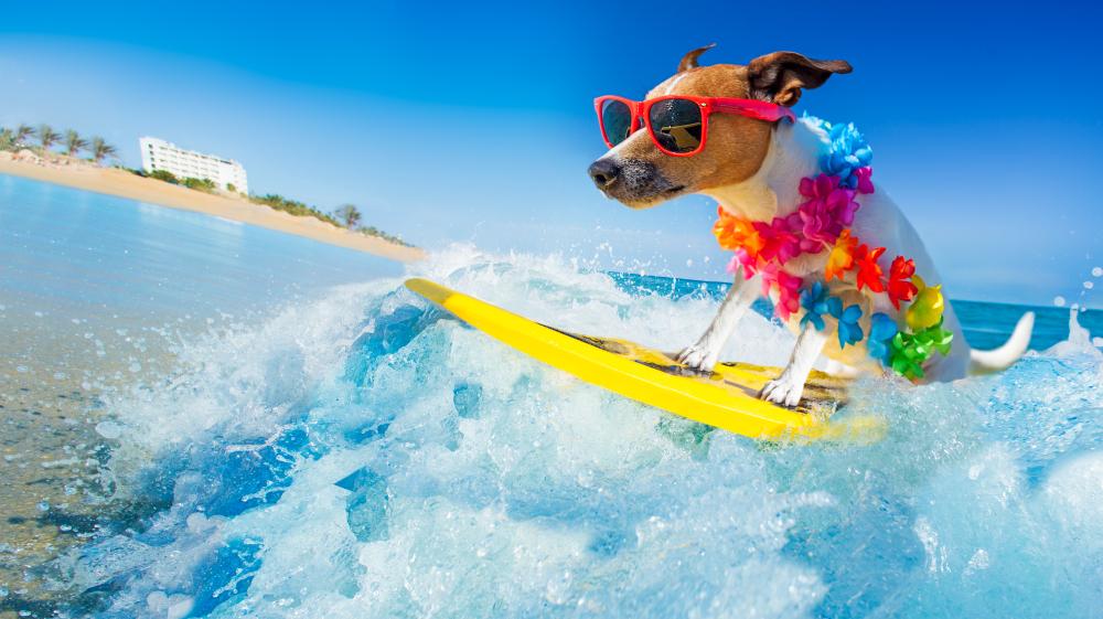9 dicas para diminuir o calor do cachorro no verão