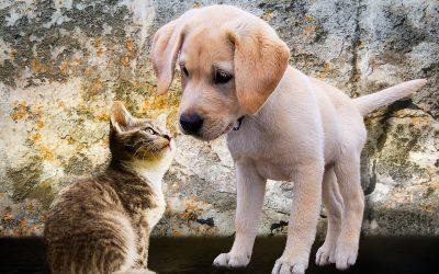 Após o divórcio, como definir a guarda do animal de estimação?