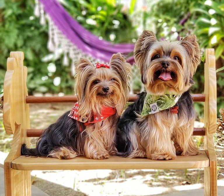 Nossos cães possuem uma missão espiritual especial em nossas vidas