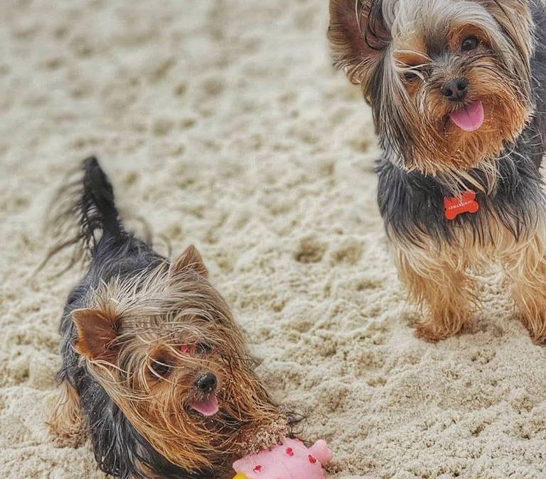 Santos estuda autorizar pets nas praias