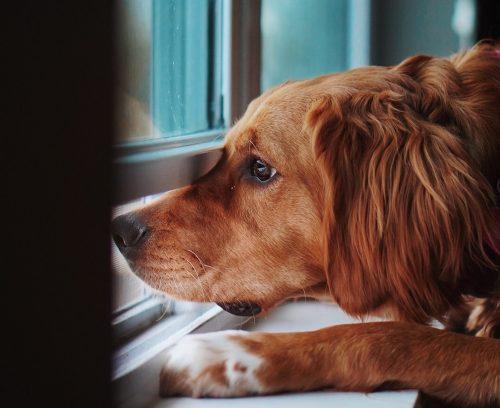 Vizinhos de condomínio reclamam do meu pet, e agora?