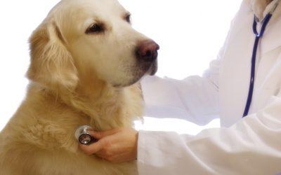 Entenda o Alzheimer Canino