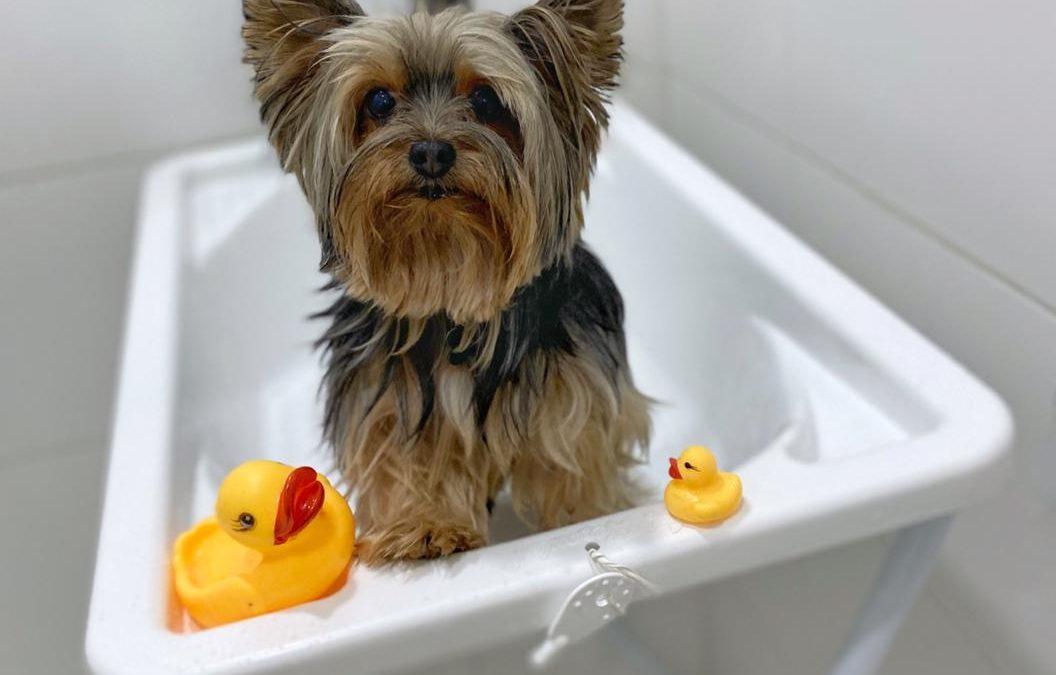 Como manter a rotina de banhos do pet em casa?