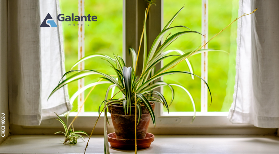 Decore sua casa com plantas que melhoram a qualidade do ar