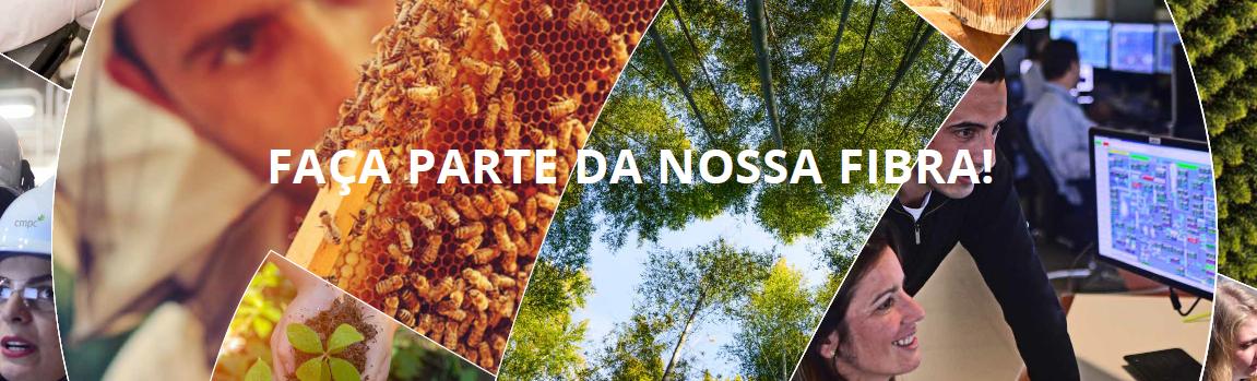 Analista de Operações Florestais SR- Pelotas