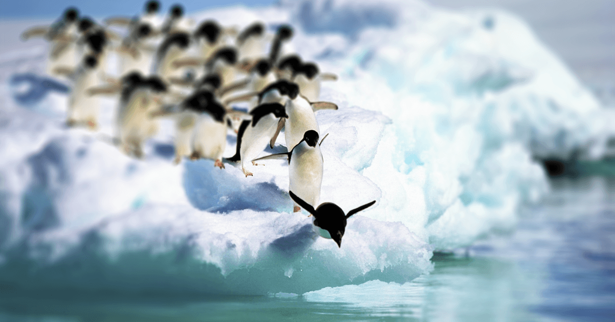 A penguin taking the first leap!
